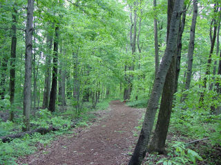 The Sacred Grove, where Joseph Smith received his First Vision